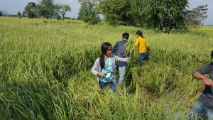 Rice harvest at the organic farm in Battambang