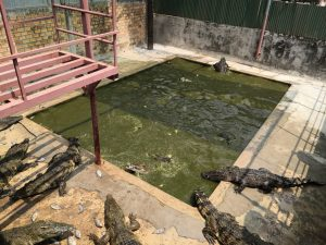 They will not become crocodile meat in Siem Reap