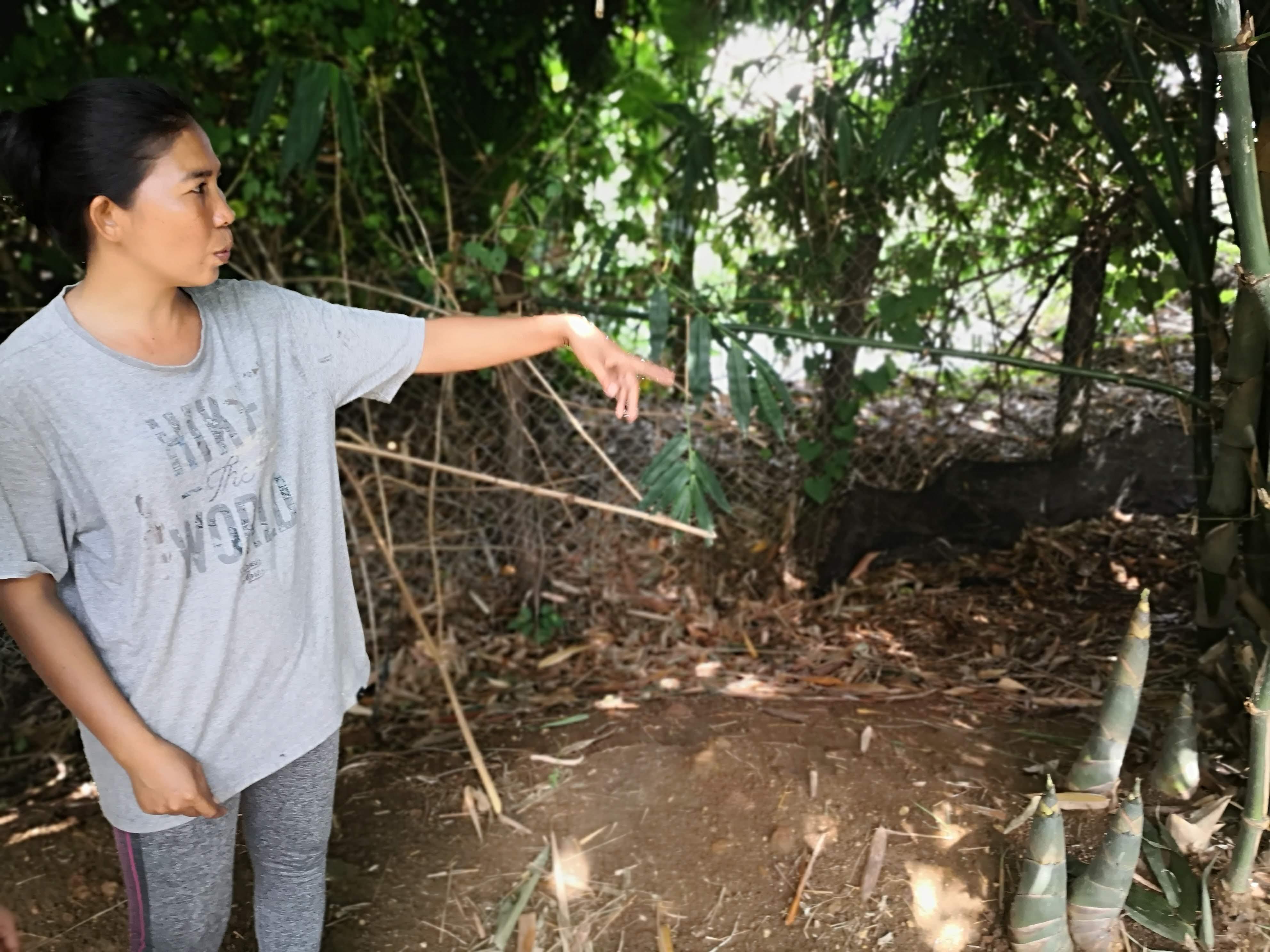 Molineat sells pickeld bamboo shoots she makes at home