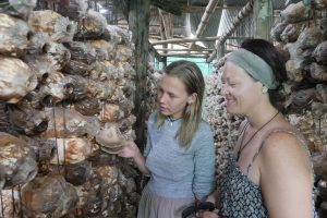 Guests visiting the mushroom farm in Siem Reap